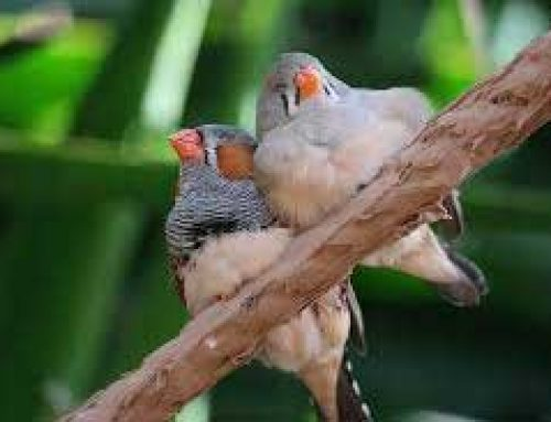 Information About Birds' Sleep