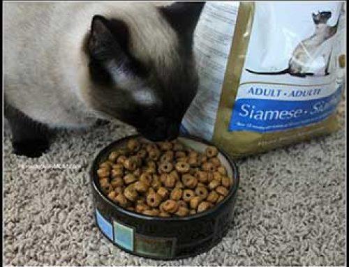 Tips For Choosing Cat Food