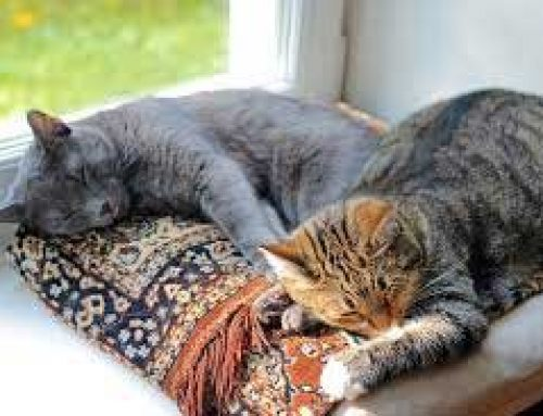 Top Reasons Why Cats Sleep So Much